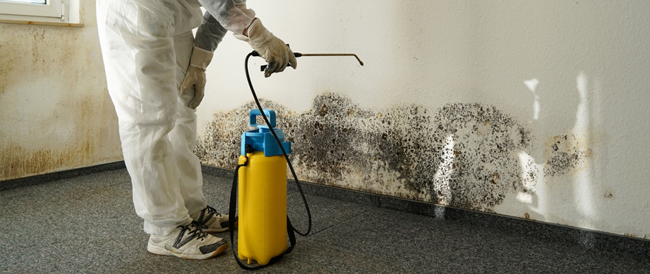 Mold Prevention in California