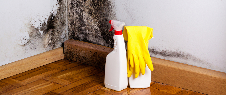 Professional Mold Prevention in California